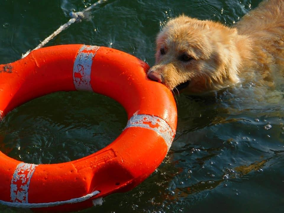 Spiagge per cani e vacanze a 4 zampe: tutte le info che ti servono